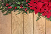 Poinsettia Flowers on Oak — Stock Photo