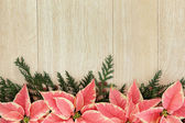Pink Poinsettia Flower Border — Stock Photo
