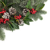 Christmas Flora — Stock Photo