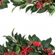Holly Berry Border — Stock Photo #50549509