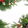 Traditional Winter Border — Stock Photo #50907091