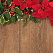 Winter Floral Border — Stock Photo