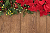 Winter Floral Border — Stock Photo