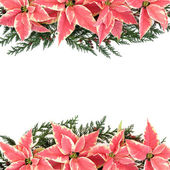Poinsettia Flower Border — Stock Photo