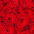 Red natural roses background — Stock Photo