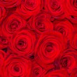 Stock Photo: Red natural roses background