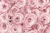 Pink natural roses background — Stock Photo