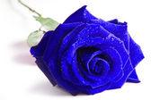 Blue rose isolerad på vit bakgrund — Stockfoto