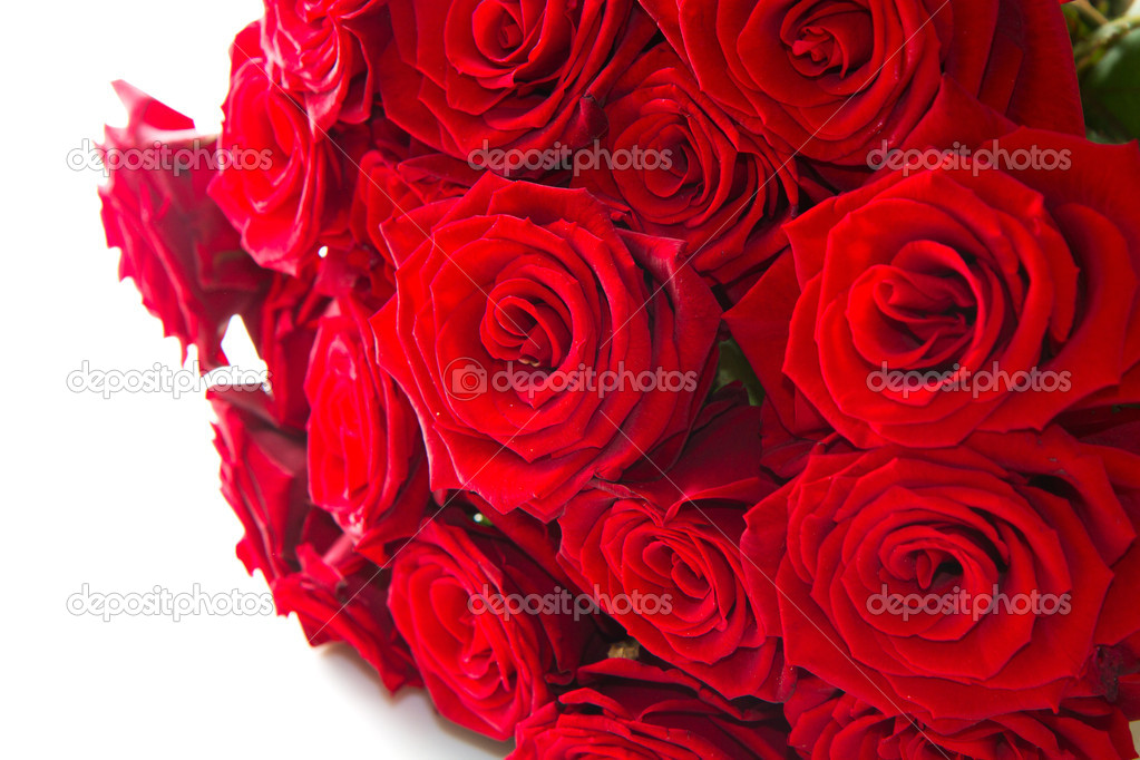 Red roses isolated on white background  Stock Photo #16832141