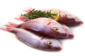 Sea bream — Stock Photo
