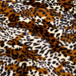 Leopard skin pattern — Stock Photo