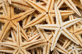 Sea star background — Stock Photo