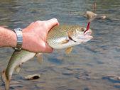Trout fishing — Stock Photo