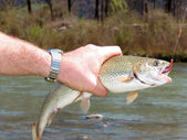 Trout fishing — Stock Photo