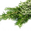 Sage and rosemary — Stock Photo