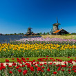 Windmill in holland — Stock Photo #24628935