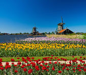 Windmill in holland — Stock Photo