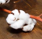 棉厂 — 图库照片