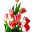 Stock Photo: Pink tulips bouquet isolated on white background