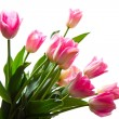 Pink tulips bouquet isolated on white background — Stock Photo