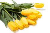 Beautiful bouquet of yellow tulips — Stock Photo