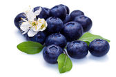 Blue berry and white flower — Stock Photo