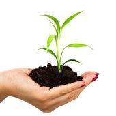 手和孤立在白色背景上的植物 — 图库照片