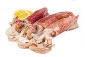 Fresh squid isolated on white background — Stock Photo