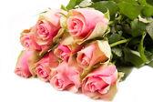 Pink roses isolated on white background  — Stock Photo