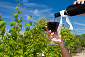 Glass of wine in the rows of grapes  — Stock Photo