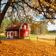 Red Swedish house amongst autumn leaves — Stock Photo