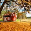 Red Swedish house amongst autumn leaves — Stock Photo #13709213