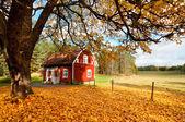 Red Swedish house amongst autumn leaves — Stock Photo