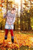 Woman raking vivid yellow autumn leaves — Stock Photo