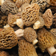 Morel Mushroom Background - Stock Photo