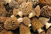 Morel Mushroom Background — Stock Photo