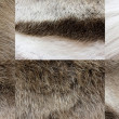 Deers fur texture — Stock Photo