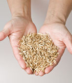Wheat in hands — Stock Photo