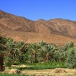 Draa Valley — Stock Photo #30358421