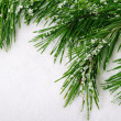 Pine branch — Stock Photo #34972091