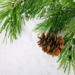 Pine branch — Stock Photo #35781473