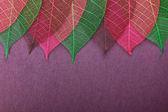 華やかな葉 — ストック写真