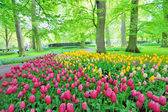 Keukenhof gardens — Stock Photo