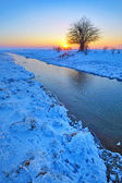 Lonely winter tree — Foto Stock