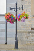 Hanging Flower Basket — Stock Photo