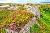 Irsko krajina hdr — Stock fotografie