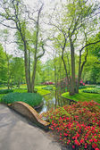 Spring flowers and blossom in Keukenhof Holland — Stock Photo