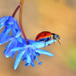 Stock Photo: Spring and little ladybug