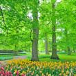 Spring tulips in park — Stock Photo