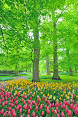 Spring tulips in park — Stock Photo